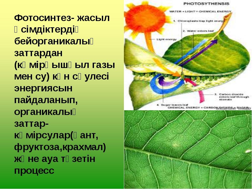 Фотосинтез- жасыл өсімдіктердің бейорганикалық заттардан (көмірқышқыл газы ме...