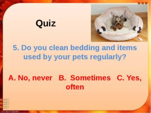 Quiz 5. Do you clean bedding and items used by your pets regularly? A. No, ne