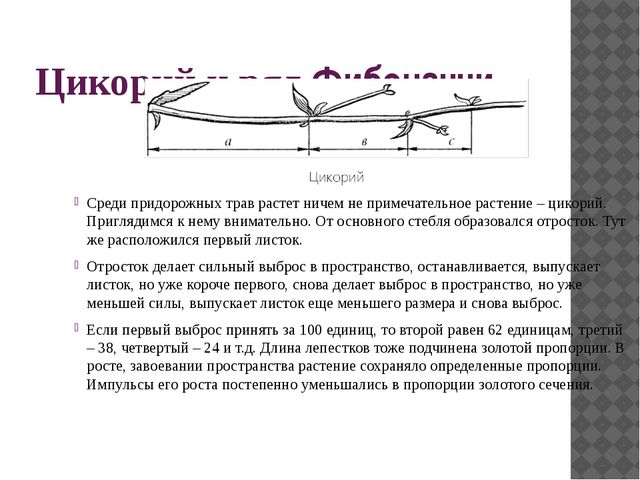 Винтовая симметрия и ряд Фибоначчи Угол поворота винтовой оси у ботаников наз...