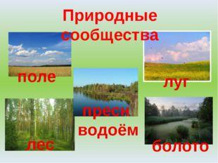 Природные сообщества поле пресн водоём луг лес болото
