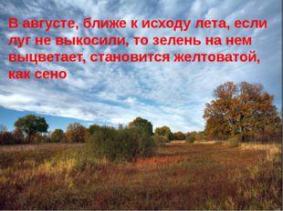 В августе, ближе к исходу лета, если луг не выкосили, то зелень на нем выцвет