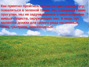 Как приятно пройтись летом по цветущему лугу, поваляться в зеленой траве. Но,