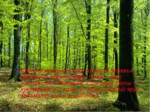 Действительно в лесу высокие деревья образуют верхний ярус. Ниже – ярус низко