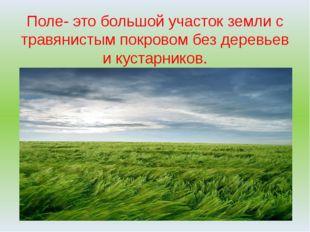 Поле- это большой участок земли с травянистым покровом без деревьев и кустарн