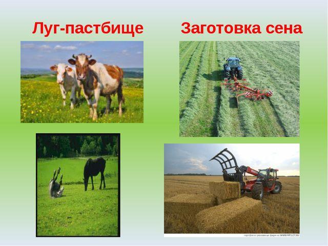 Луг-пастбище Заготовка сена