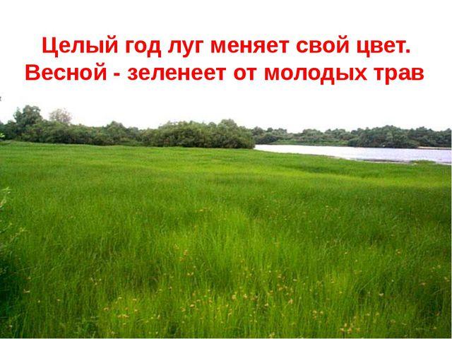 Целый год луг меняет свой цвет. Весной - зеленеет от молодых трав