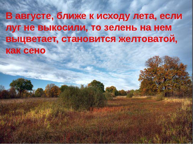 В августе, ближе к исходу лета, если луг не выкосили, то зелень на нем выцвет...