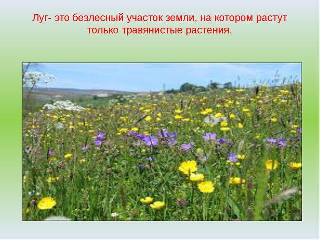 Луг- это безлесный участок земли, на котором растут только травянистые растен...