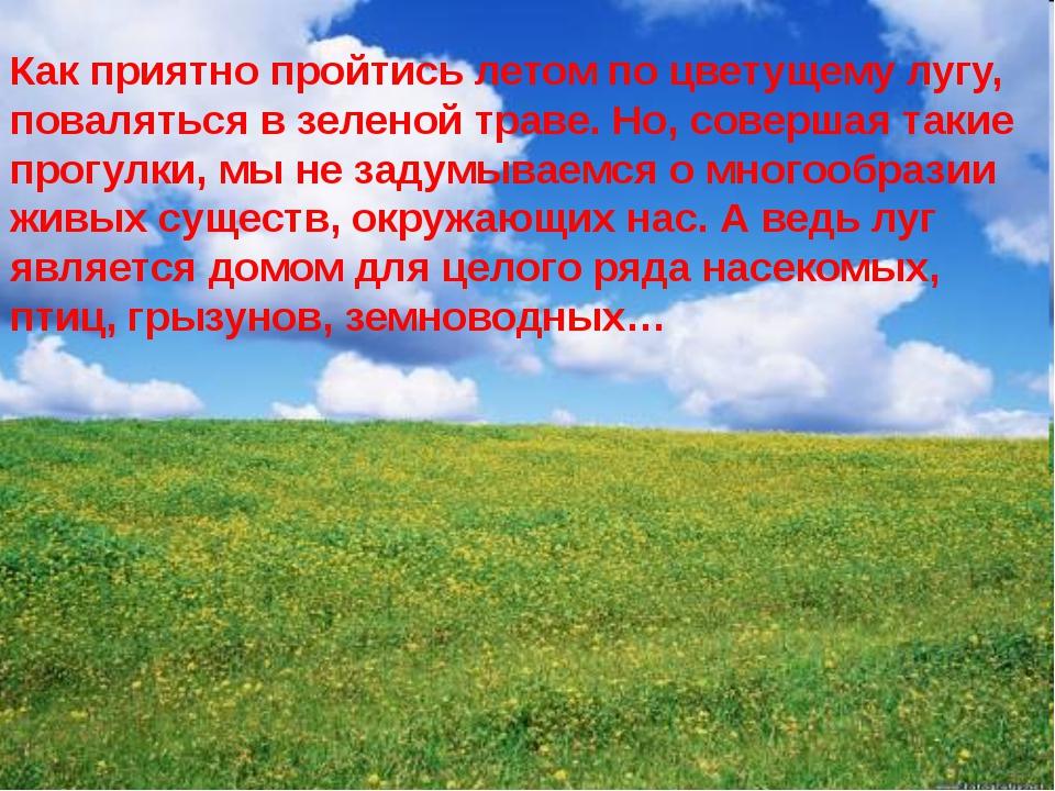 Как приятно пройтись летом по цветущему лугу, поваляться в зеленой траве. Но,...
