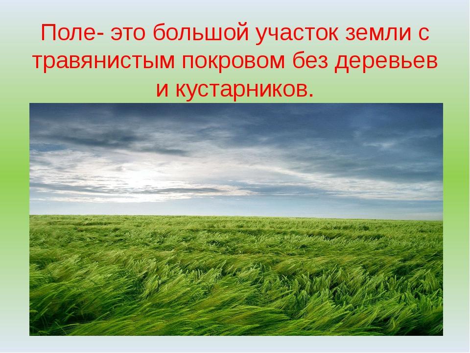 Поле- это большой участок земли с травянистым покровом без деревьев и кустарн...