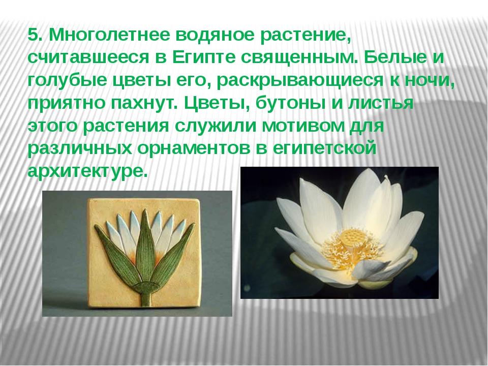 5. Многолетнее водяное растение, считавшееся в Египте священным. Белые и голу...