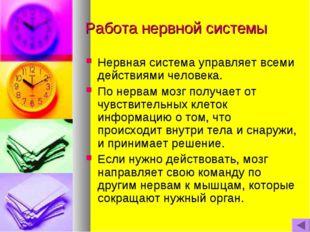 Работа нервной системы Нервная система управляет всеми действиями человека. П