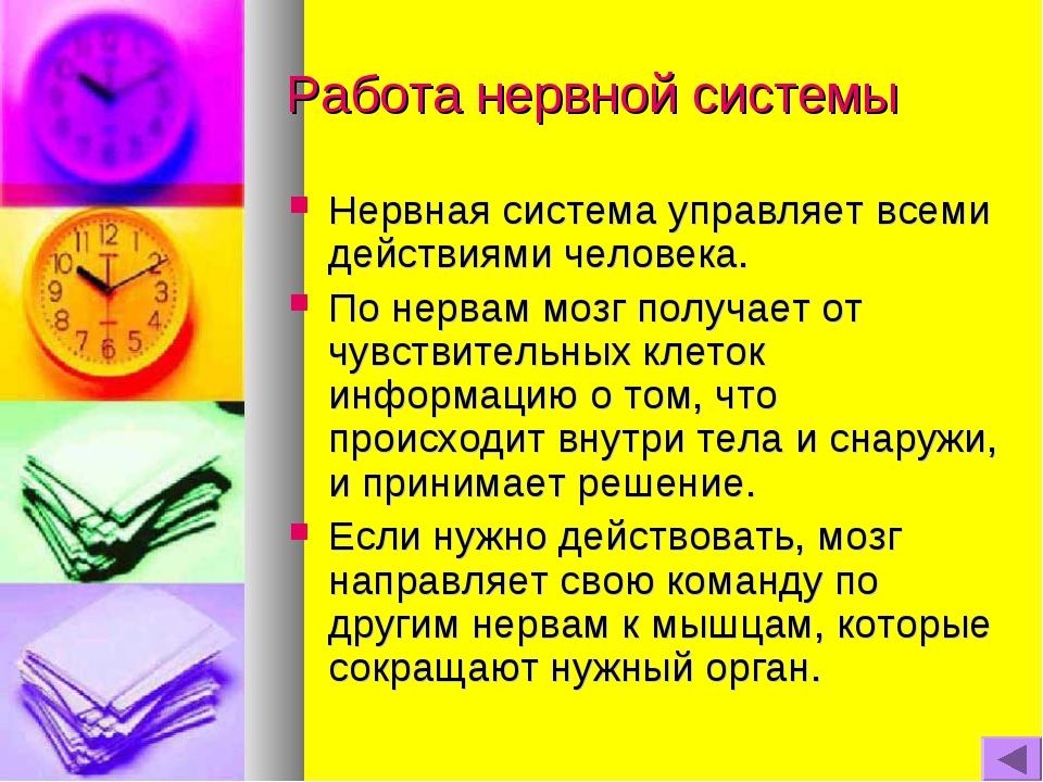 Работа нервной системы Нервная система управляет всеми действиями человека. П...