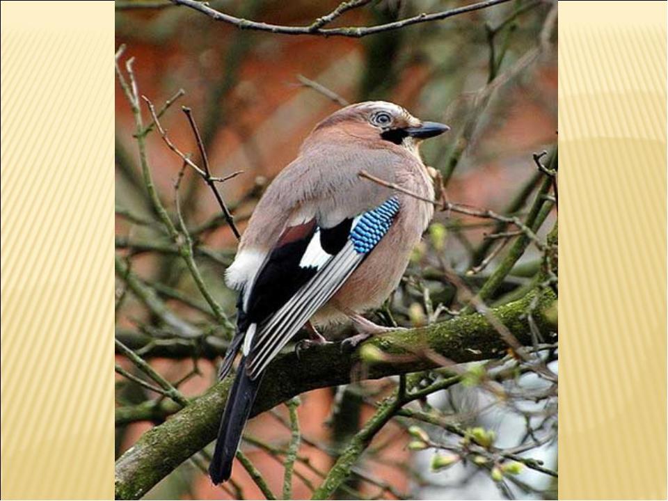 Хищные птицы на охоте фото штамбовой форме