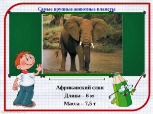 Самые крупные животные планеты Африканский слон Длина – 6 м Масса – 7,5 т htt