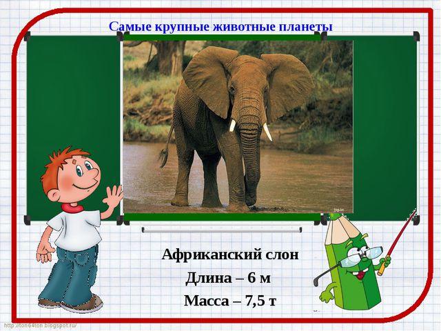Самые крупные животные планеты Африканский слон Длина – 6 м Масса – 7,5 т htt...