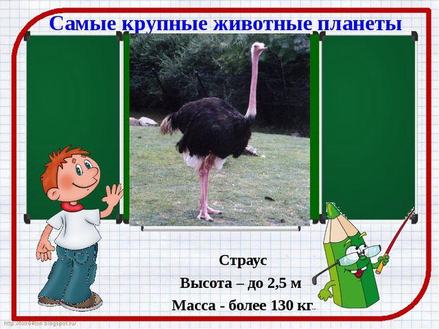 Самые крупные животные планеты Страус Высота – до 2,5 м Масса - более 130 кг...