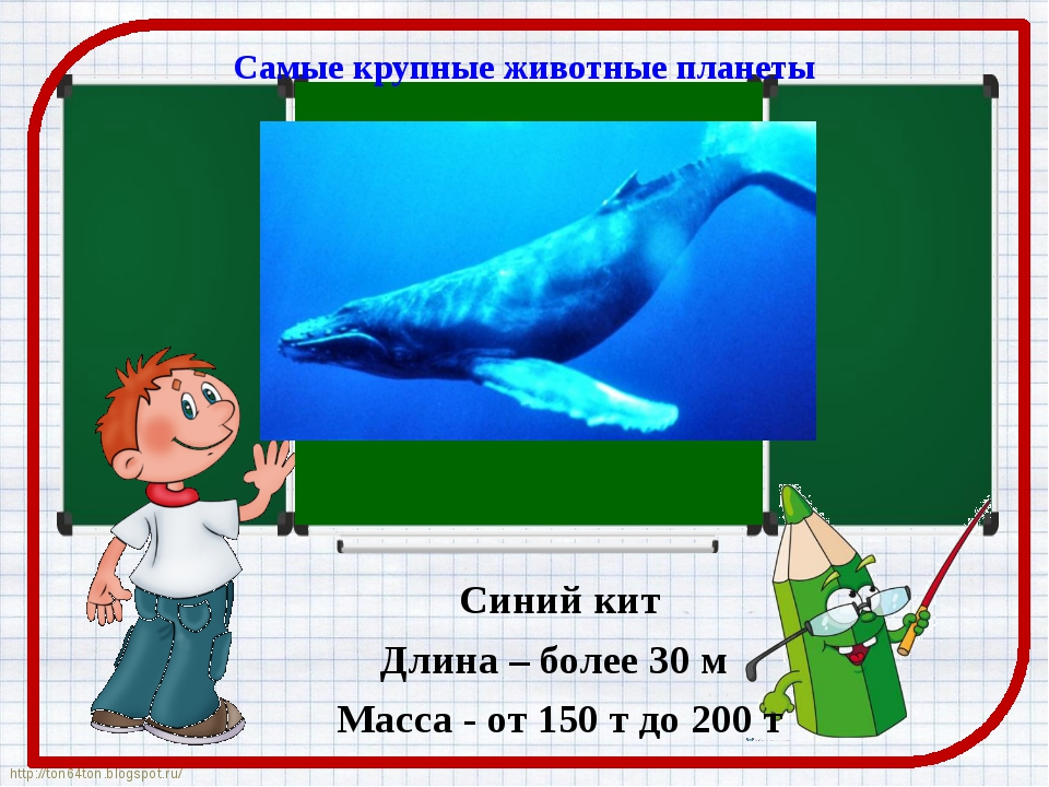 Самые крупные животные планеты Синий кит Длина – более 30 м Масса - от 150 т...