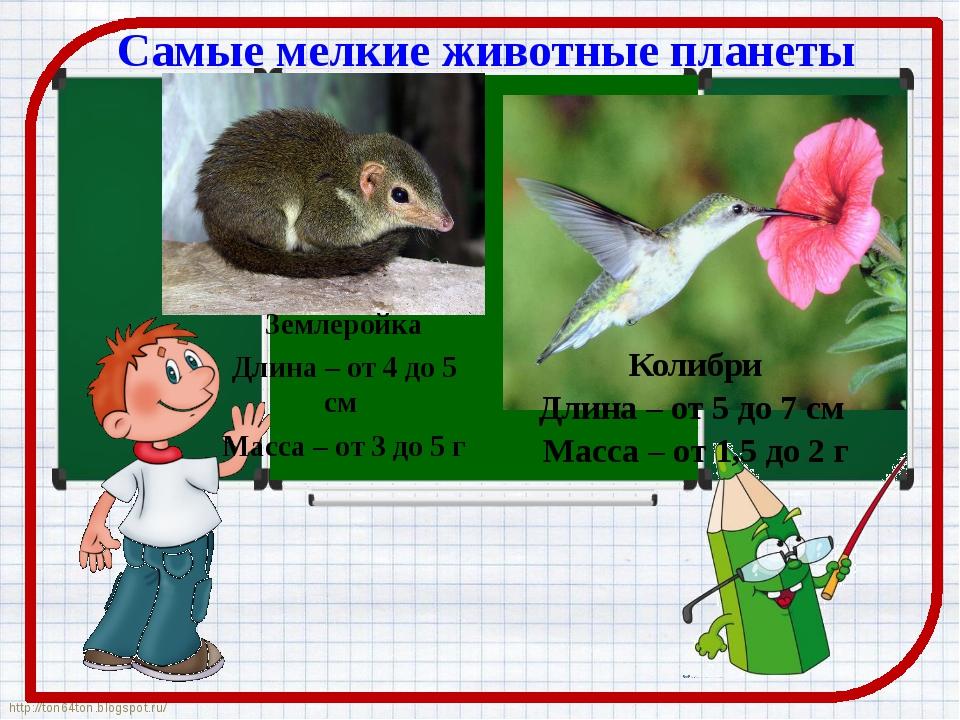 Самые мелкие животные планеты Землеройка Длина – от 4 до 5 см Масса – от 3 до...