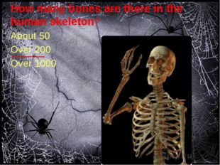 How many bones are there in the human skeleton? About 50 Over 200 Over 1000
