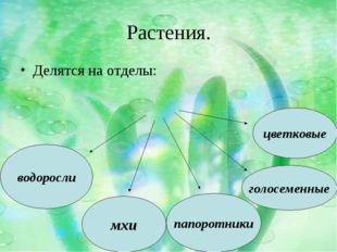 Растения. Делятся на отделы: мхи водоросли папоротники голосеменные цветковые