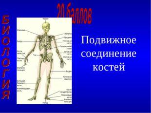 Подвижное соединение костей