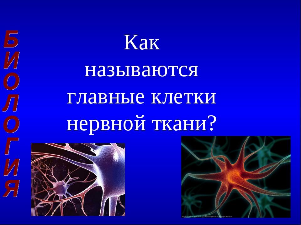 Как называются главные клетки нервной ткани?