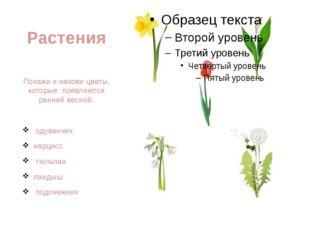 Растения Покажи и назови цветы, которые появляются ранней весной: одуванчик н