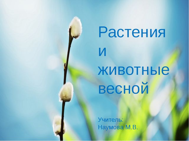 Растения и животные весной Учитель: Наумова М.В.