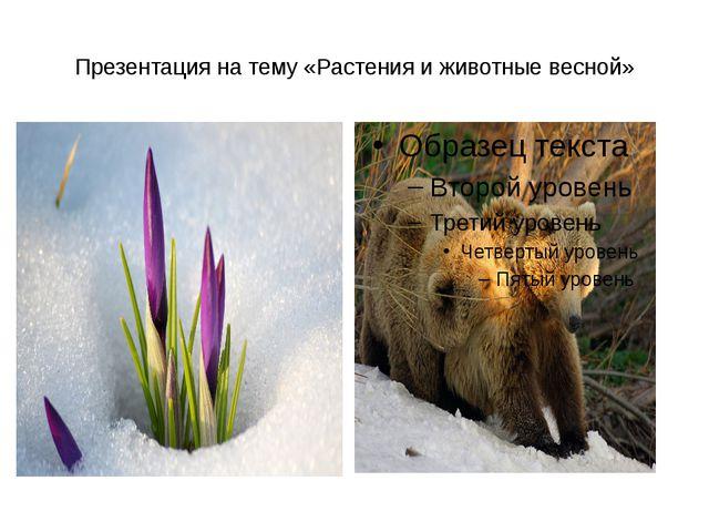 Презентация на тему «Растения и животные весной»