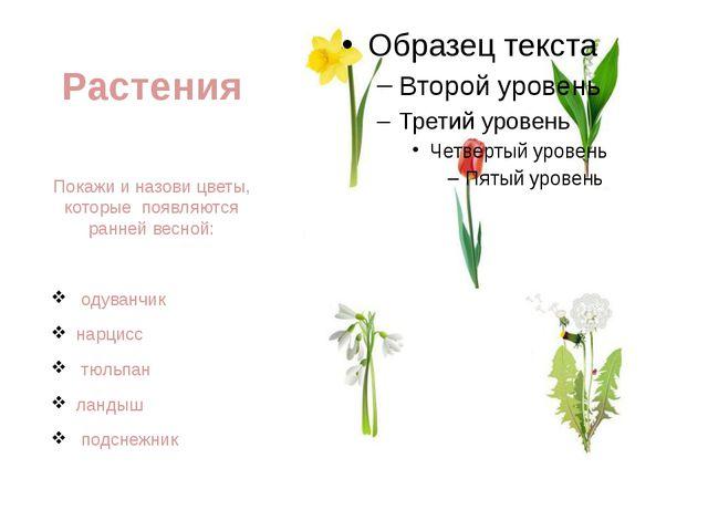 Растения Покажи и назови цветы, которые появляются ранней весной: одуванчик н...