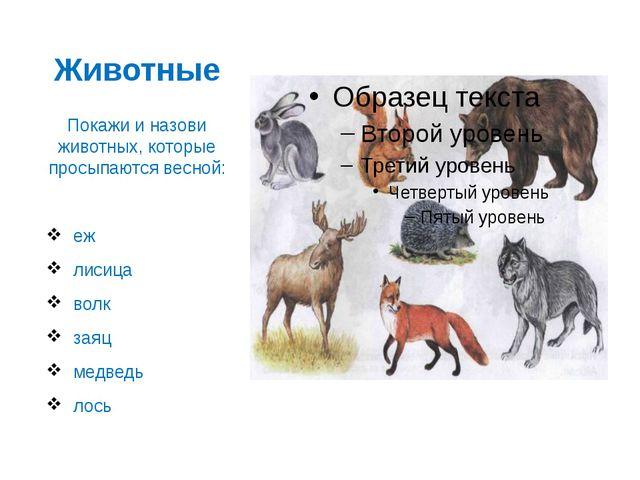 Животные Покажи и назови животных, которые просыпаются весной: еж лисица волк...