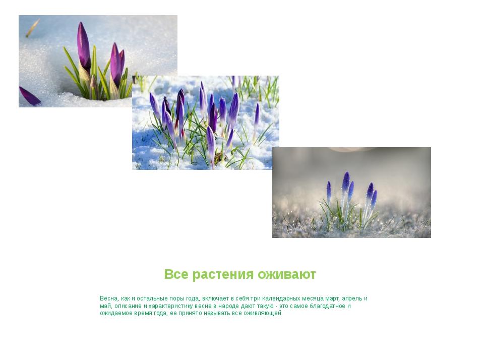 Все растения оживают Весна, как и остальные поры года, включает в себя три ка...