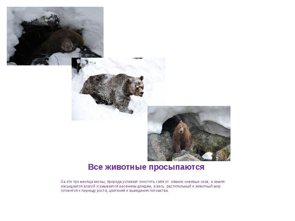 Все животные просыпаются За эти три месяца весны, природа успевает очистить с...