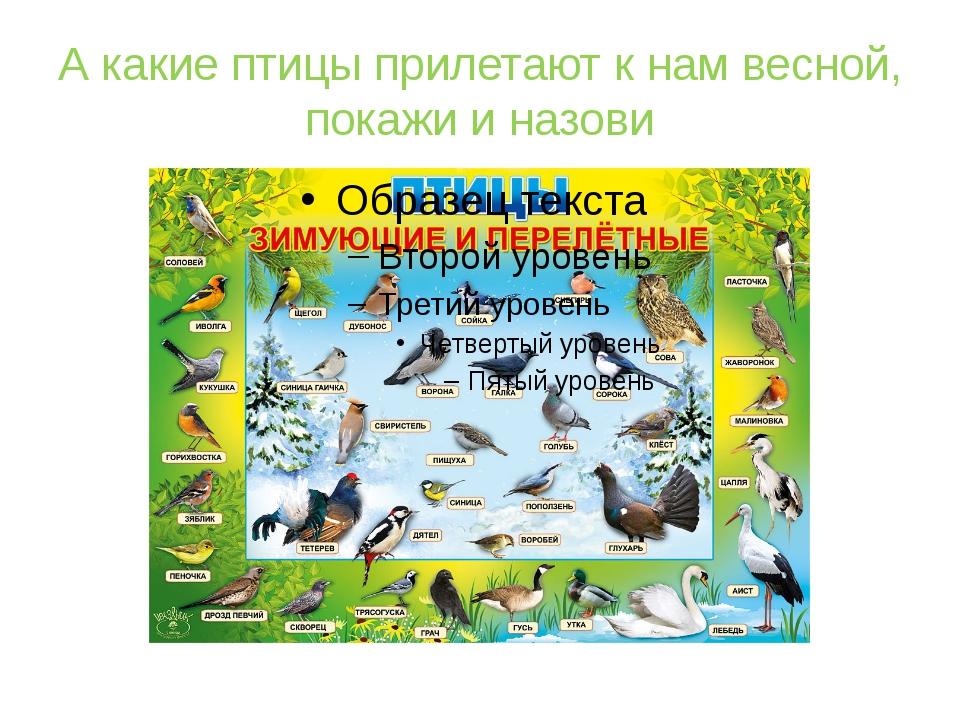 А какие птицы прилетают к нам весной, покажи и назови