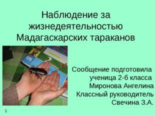 Наблюдение за жизнедеятельностью Мадагаскарских тараканов Сообщение подготови