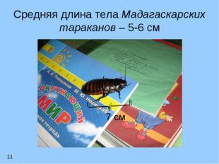 Средняя длина тела Мадагаскарских тараканов – 5-6 см 7 см 11