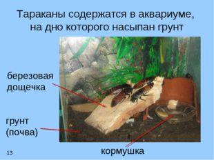 Тараканы содержатся в аквариуме, на дно которого насыпан грунт грунт (почва)