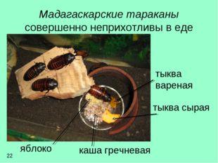 Мадагаскарские тараканы совершенно неприхотливы в еде тыква вареная тыква сыр
