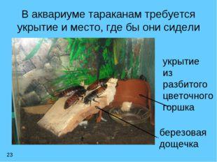 В аквариуме тараканам требуется укрытие и место, где бы они сидели 23 укрытие