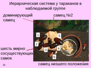 Иерархическая система у тараканов в наблюдаемой группе самец №2 доминирующий
