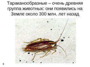 Тараканообразные – очень древняя группа животных: они появились на Земле окол