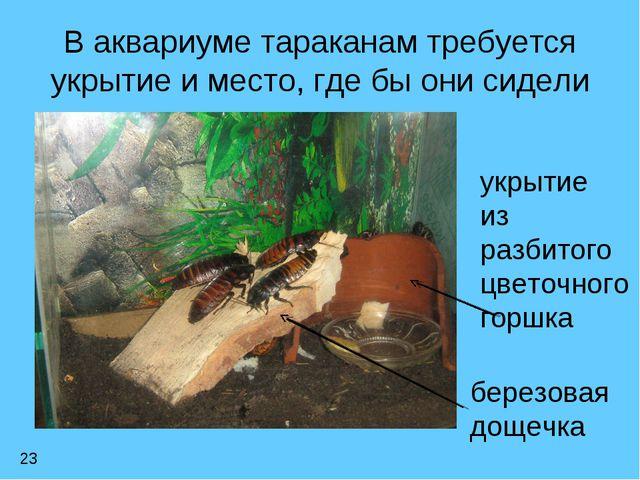 В аквариуме тараканам требуется укрытие и место, где бы они сидели 23 укрытие...