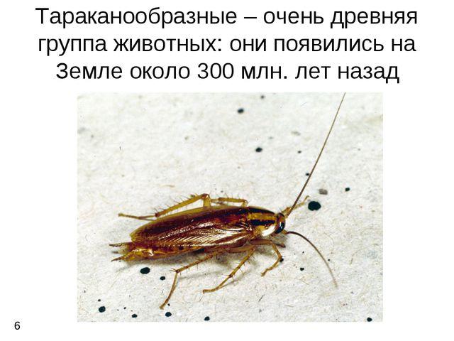 Тараканообразные – очень древняя группа животных: они появились на Земле окол...