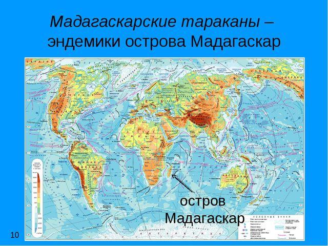 Мадагаскарские тараканы – эндемики острова Мадагаскар остров Мадагаскар 10