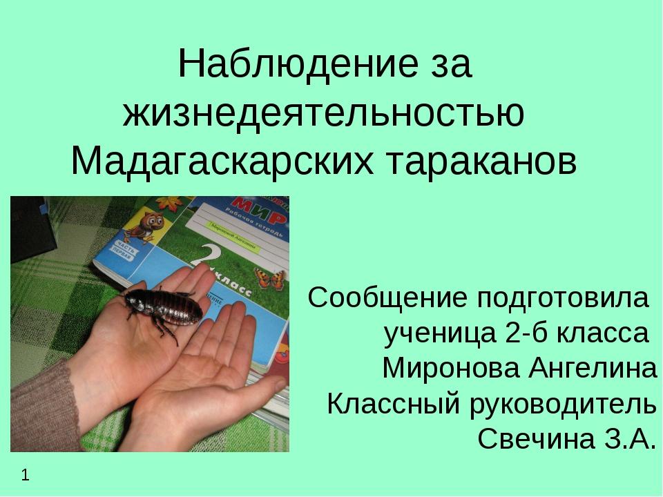 Наблюдение за жизнедеятельностью Мадагаскарских тараканов Сообщение подготови...