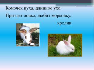 Комочек пуха, длинное ухо, Прыгает ловко, любит морковку. кролик