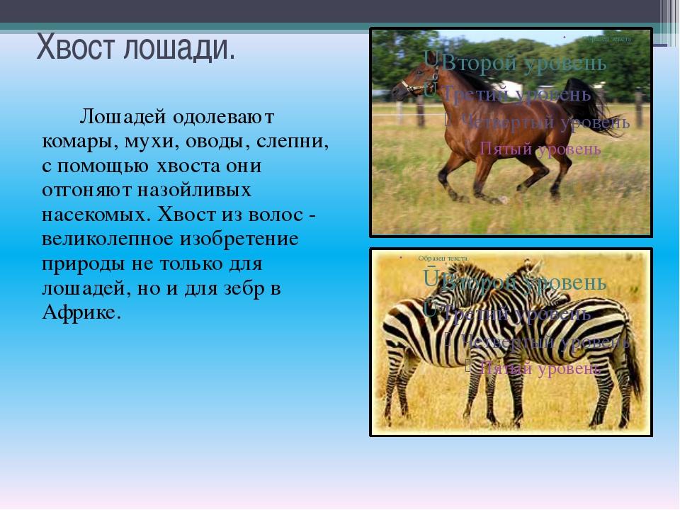 Хвост лошади. Лошадей одолевают комары, мухи, оводы, слепни, с помощью хвоста...