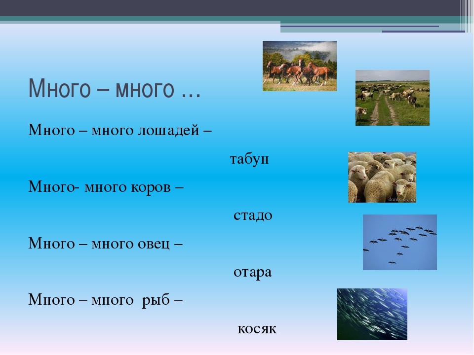 Много – много … Много – много лошадей – табун Много- много коров – стадо Мног...
