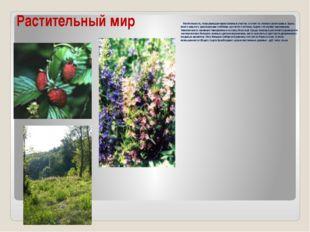 Растительный мир Растительность, покрывающая нераспаханные участки, состоит и